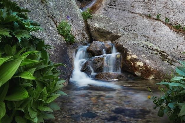 Fantastische bergbeken, weelderig groen en bloemen rondom. ontdooid bronwater uit de bergen. magisch uitzicht op hoge bergen, alpenweiden