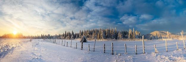 Fantastische blauwe lucht en besneeuwde bomen