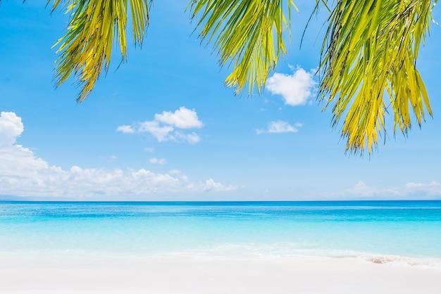 Fantastische strand met palmbomen