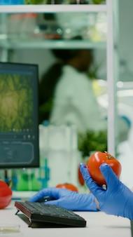Farmaceutisch chemicus die tomaat onderzoekt voor microbiologisch experiment
