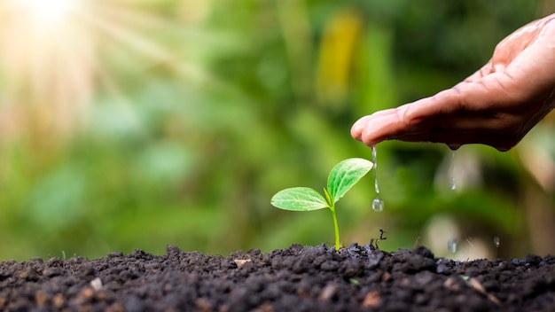 Farmer's hand planten, jonge planten water geven op groene achtergrond, concept van natuurlijke plant zaaien en groeien.