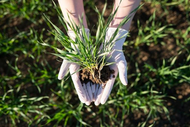 Farmer's handen met gewassen met vruchtbare grond in het veld