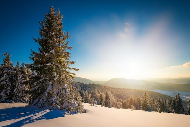 Fascinerend zonnig landschap van een winterbos gelegen op een besneeuwde helling op een zonnige ijzige winterdag.