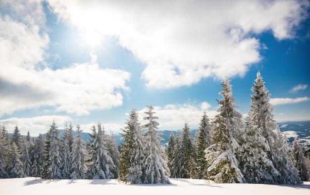 Fascinerend zonnig landschap van een winterbos gelegen op een besneeuwde helling op een zonnige ijzige winterdag