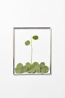 Feestelijk frame met eucalyptus plantensamenstelling van gevallen bladeren op een lichtgrijze muur, kopieer ruimte.