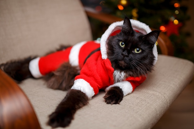 Feestelijk portret van zwarte kat in santa claus-kostuum op fauteuil met kerstboom