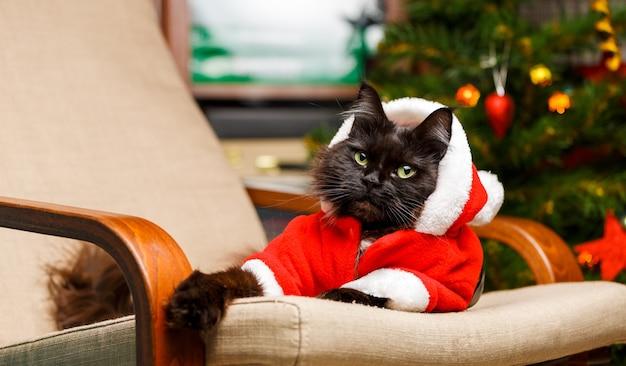 Feestelijk portret van zwarte kat in santa claus-kostuum op fauteuil tegen de achtergrond van de kerstboom