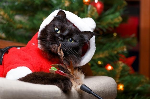 Feestelijk portret van zwarte kat in santa claus-kostuum op leunstoel