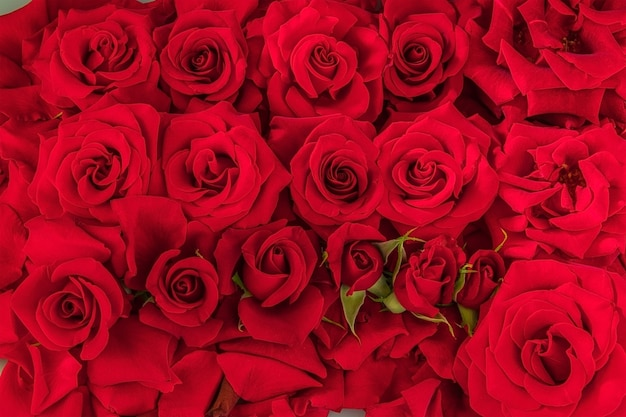Feestelijke achtergrond van vele toppen van rode rozen