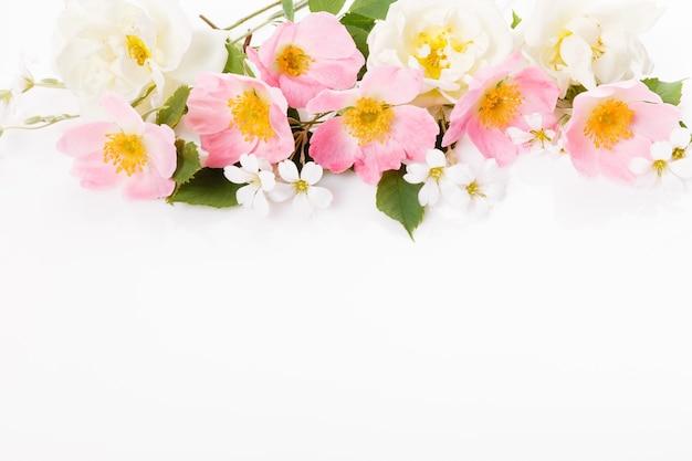 Feestelijke bloem wilde roze roos samenstelling op de witte achtergrond. bovenaanzicht, plat gelegd. ruimte kopiëren. verjaardag, moederdag, valentijnsdag, dames, trouwdag concept.