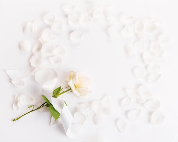 Feestelijke bloem witte roos samenstelling met lint en bloemblaadjes op de witte achtergrond. bovenaanzicht, plat gelegd. ruimte kopiëren. verjaardag, moederdag, valentijnsdag, dames, trouwdag concept.
