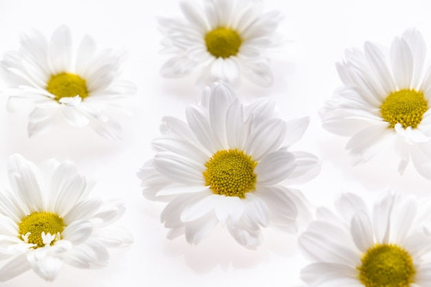 Feestelijke bloemsamenstelling op witte achtergrond