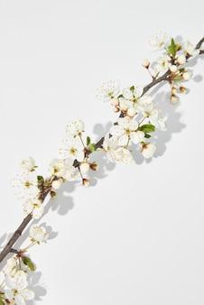 Feestelijke diagonale compositie van tedere bloeiende kersenbloemen tak