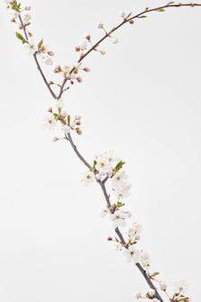 Feestelijke felicitatie kaart met verse natuurlijke bloeiende lente kersentakje in een glazen vaas