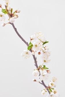 Feestelijke felicitatiekaart met bloeiende kersentak