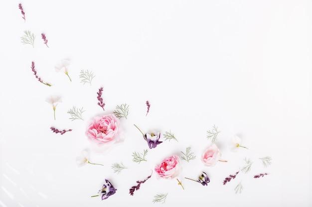 Feestelijke roze bloem engelse roos samenstelling op de witte achtergrond. bovenaanzicht, plat gelegd. ruimte kopiëren. verjaardag, moederdag, valentijnsdag, dames, trouwdag concept.