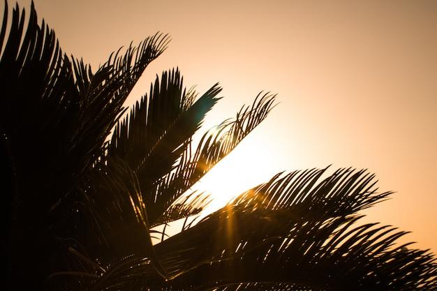 Fel oranje vuur van oranje breekt door de takken van een palmboom in de zonsondergang