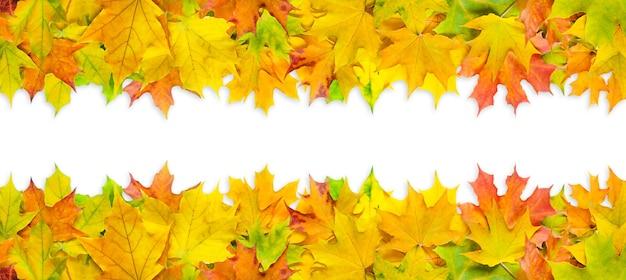 Fel veelkleurige esdoorn bladeren geïsoleerd op een witte achtergrond. banner met herfstbladeren grens.