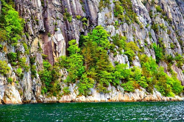 Felgroene bomen die op rotsen aan het water groeien