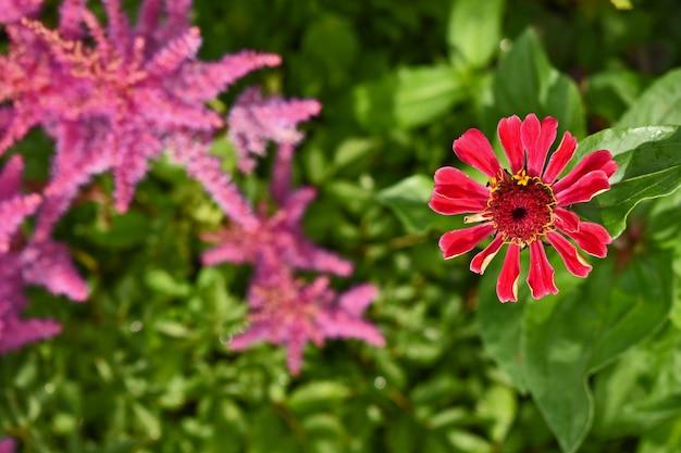 Felroze bloemen in de tuin