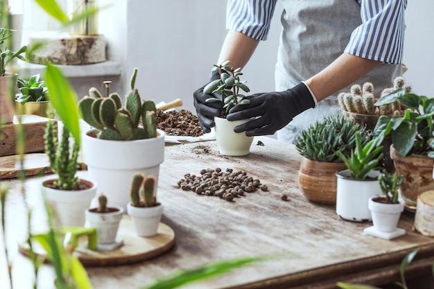 Femele tuinman verplanten plant in klassieke potten op de houten tafel. concept van huistuin. lente tijd