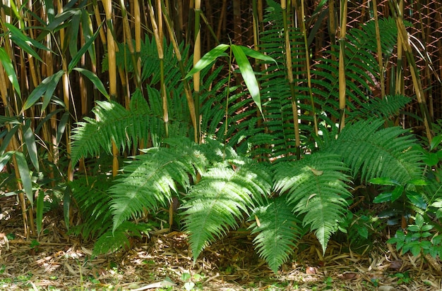 Fern plant in zomer bos.
