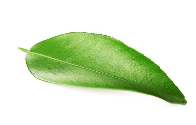 Ficus blad, geïsoleerd op wit
