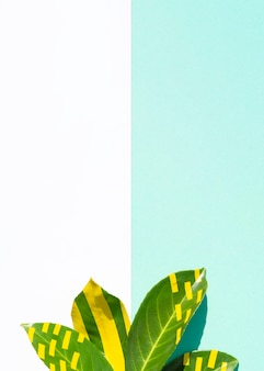 Ficusbladeren met tegenover elkaar stellende exemplaar ruimteachtergrond
