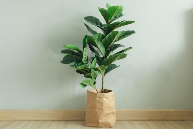 Fiddle leaf fig grote bladplant met papieren pot in de kamer van een appartement.