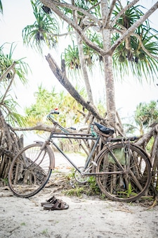 Fiets op strandboom