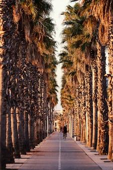 Fietspad tussen palmbomen