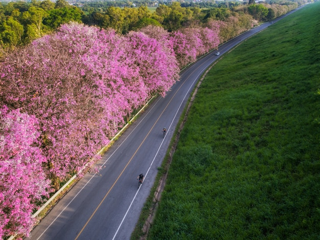 Fietsweg met roze bloemen in het bangpra-meer