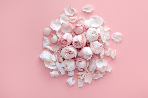 Fijne roze rozen en bloemblaadjes liggen op een lichtroze achtergrond, plat lag, bovenaanzicht