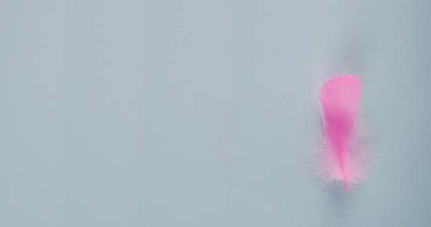 Fijne roze veer op een blauwe achtergrond, een banner voor de site, een mooie ansichtkaart en een plek voor de tekst, zorg, kritieke dagen voor vrouwen