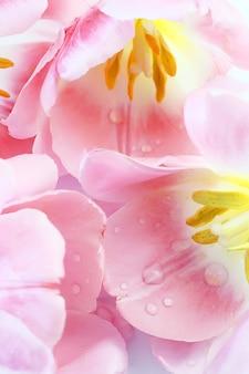 Fijne zachte pastelkleurachtergrond met dichtbij roze tulpen