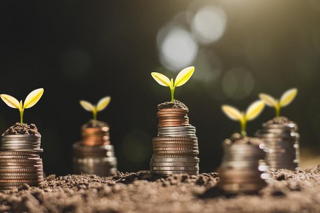 Financiële groei, munten en zaailing.