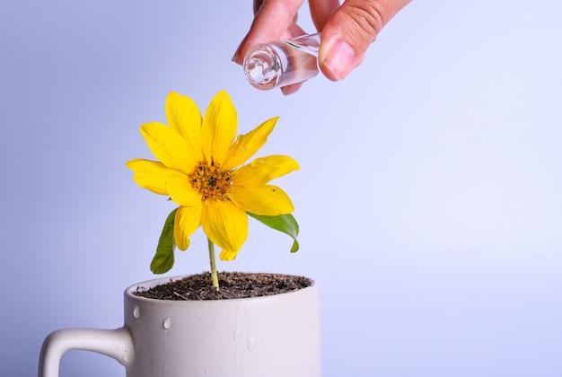 Financiële planning, geldgroei concept. vrouwelijke hand die gele bloem in een kop drenken. kopieer ruimte