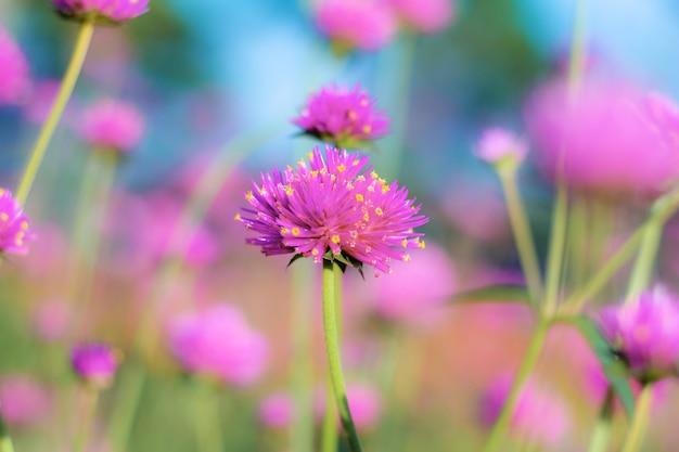 Fiower hoofd van paars in park met mooi aan blauwe hemel.