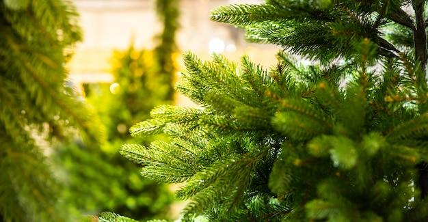 Fir tree branch close-up, nieuwjaar. traditionele viering van de wintervakantie. vrolijk kerstfeest