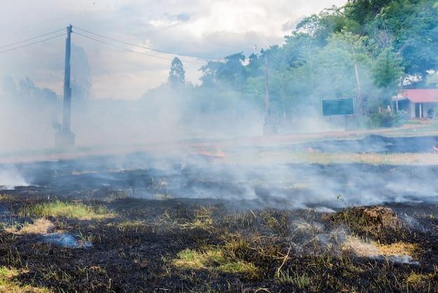 Firebreak gebruiken voor het stoppen van wildvuur.