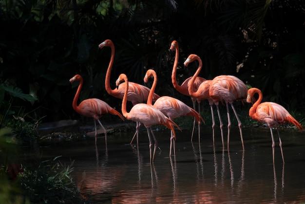 Flamingo in de dierentuin, thailand