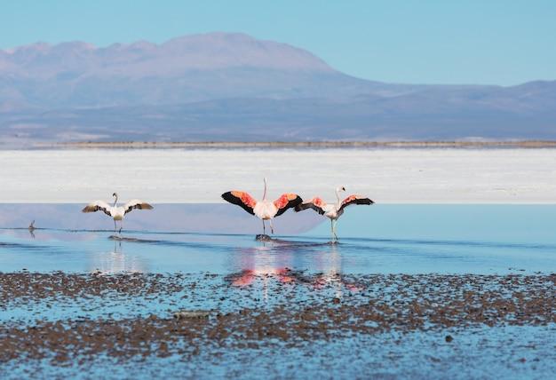 Flamingo in het meer van de boliviaanse altiplano wildlife natuur wildernis