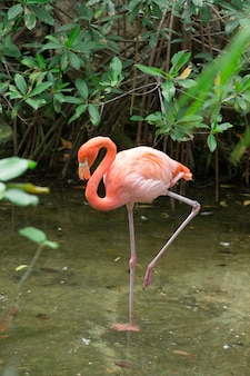 Flamingo in meer