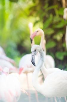 Flamingo kijken naar de camera natuurlijke achtergronden