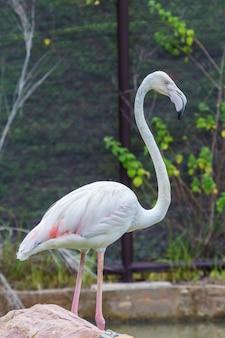 Flamingo mooi portret op een donkere achtergrond