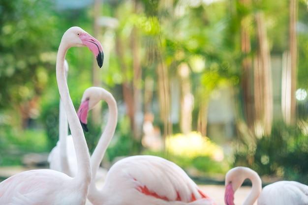 Flamingo natuurlijke achtergronden