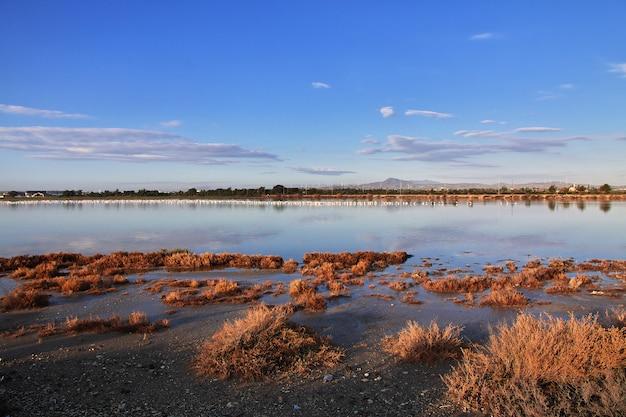 Flamingo op zout meer in larnaca, cyprus