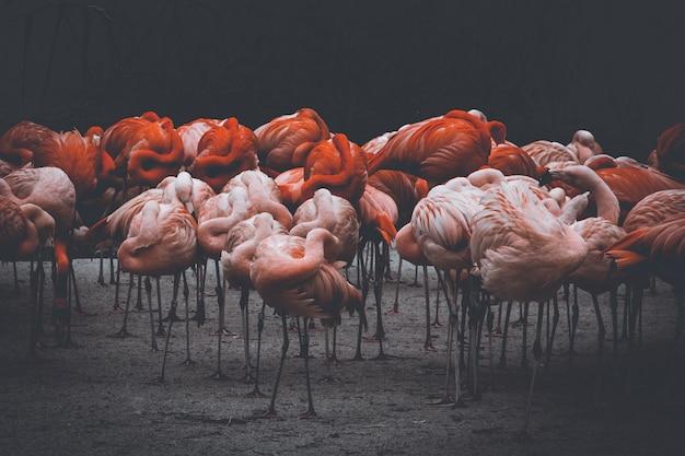 Flamingo's in de kou