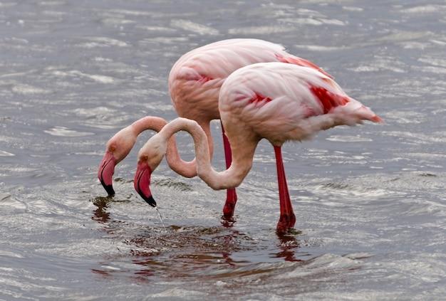 Flamingo's in walvis bay - namibië
