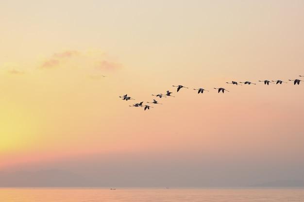 Flamingo's tijdens de vlucht vogels in de lucht